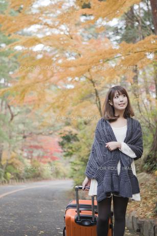 秋の紅葉した公園でトランクを引いている女性の素材 [FYI01096719]