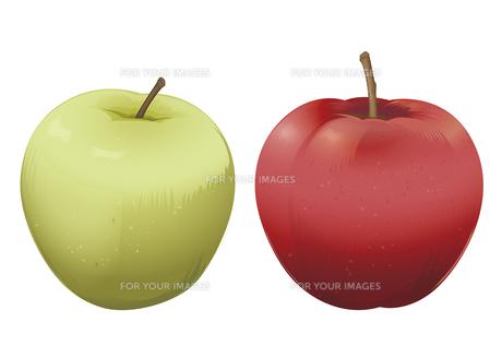 果物 リンゴ 青リンゴの素材 [FYI01108866]