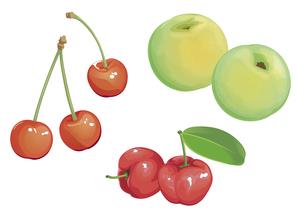 果物 チェリー 青梅 アセロラの素材 [FYI01108993]