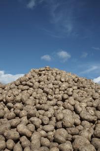 ジャガイモ畑の素材 [FYI01109562]
