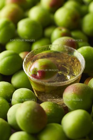 梅酒と梅の素材 [FYI01109647]