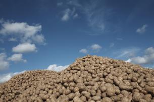 ジャガイモ畑の素材 [FYI01109651]