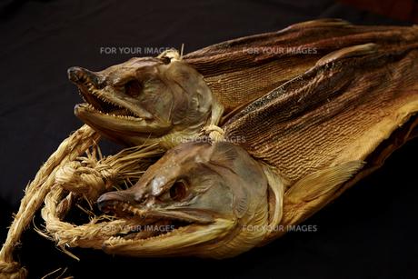 鮭の燻製の素材 [FYI01109844]