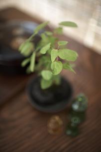 テーブルの上のグリーンの素材 [FYI01114837]