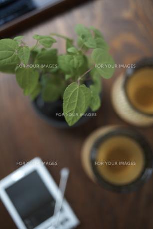 テーブルの上のグリーンの素材 [FYI01114857]