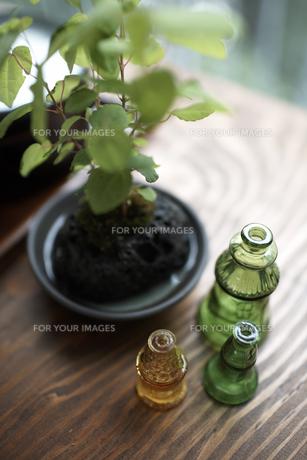 テーブルの上のグリーンと空き瓶の素材 [FYI01115035]