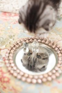 鏡を見るスコティッシュフォールドの素材 [FYI01115077]