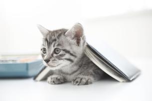 猫(雑種)と本と電卓の素材 [FYI01116967]