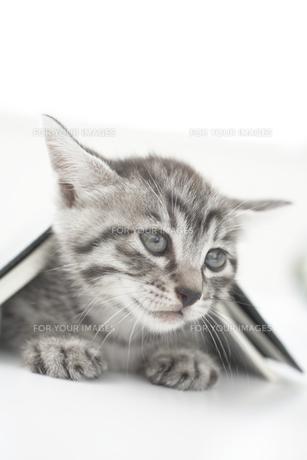 猫(雑種)と本の素材 [FYI01117100]