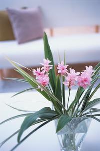 花瓶に生けたピンクの花の素材 [FYI01117124]