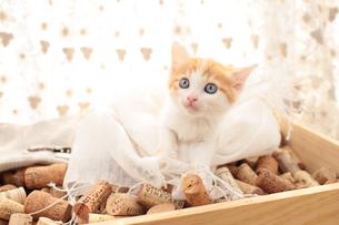 コルクを詰めた箱の上に座る日本猫の素材 [FYI01117804]