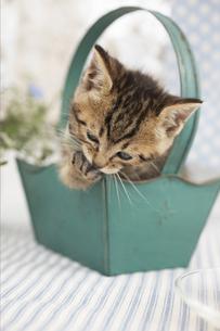 箱に入った猫の素材 [FYI01118713]