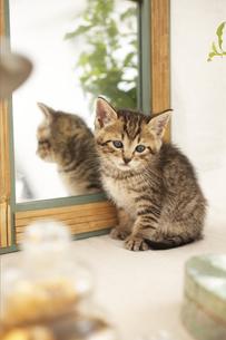 鏡と猫の素材 [FYI01118757]