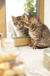 鏡を見る猫の素材 [FYI01118848]