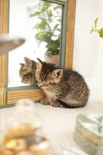 鏡のそばで眠る猫の素材 [FYI01118849]
