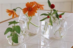 花の素材 [FYI01119467]