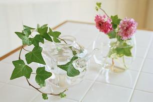 花の素材 [FYI01119585]