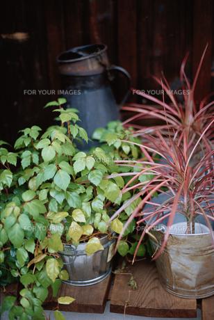 植物の素材 [FYI01119777]