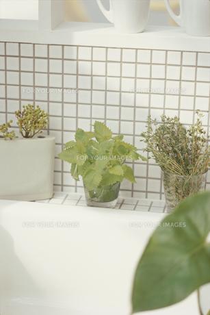 キッチンの観葉植物の素材 [FYI01120251]