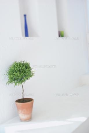鉢植えの木の素材 [FYI01121038]