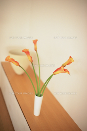 棚の上の花瓶に生けたカラーの素材 [FYI01121054]