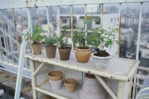 屋上の棚に置いた植木の素材 [FYI01121553]