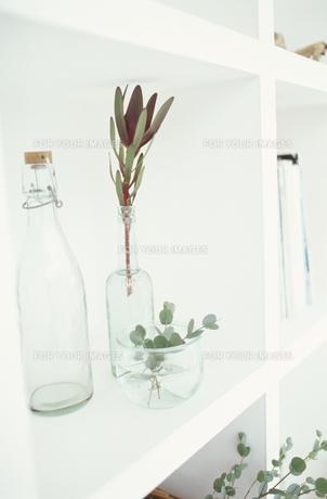 植物とグラスの素材 [FYI01121560]