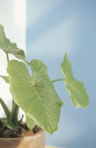 植物の素材 [FYI01121585]