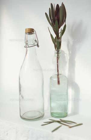 グラスと植物の素材 [FYI01121630]