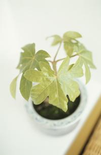 植物の素材 [FYI01121697]