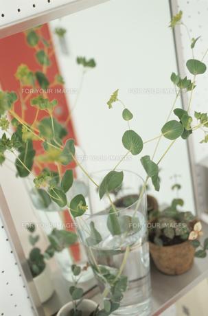 植物の素材 [FYI01121700]