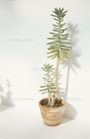 植物の素材 [FYI01121711]