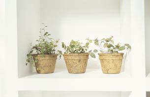 植木の素材 [FYI01121743]