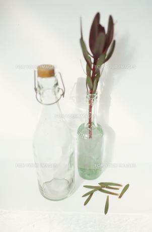 グラスと植物の素材 [FYI01121749]