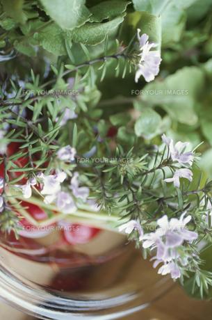 ピンクの小花の素材 [FYI01122096]