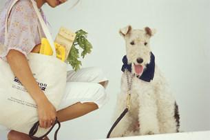 買い物バッグを下げた女性と犬(ワイヤーフォックステリア)の素材 [FYI01122201]