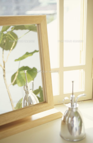 霧吹きと鏡に映る植物(フィカス,ウンベラータ)の素材 [FYI01122609]