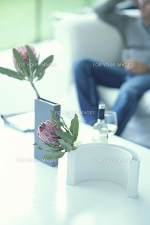 花瓶に活けた花(プロテア)とソファで寛ぐ男性の素材 [FYI01122806]
