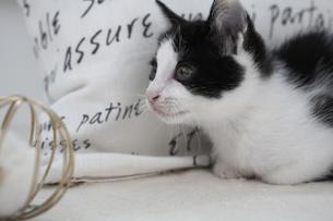 座る子猫とオモチャの素材 [FYI01123198]