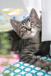 グリーンの奥に座る子猫の素材 [FYI01123220]