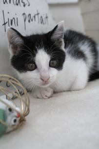 座る子猫とオモチャの素材 [FYI01123270]