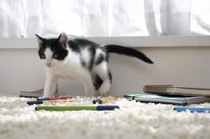 ラグマットの上の子猫と文具の素材 [FYI01123282]