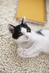 ラグマットで寛ぐ子猫と黄色のノートの素材 [FYI01123294]
