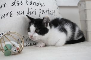 座る子猫とオモチャの素材 [FYI01123322]