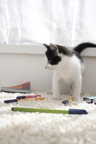 ラグマットの上の子猫と文具の素材 [FYI01123383]