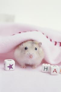 ピンクの毛布とハムスターの素材 [FYI01123826]