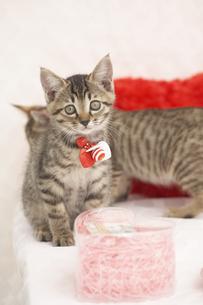 2匹の猫と小物の素材 [FYI01125642]