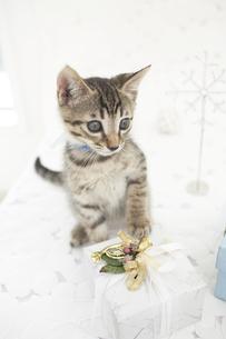 猫とプレゼントの素材 [FYI01125833]