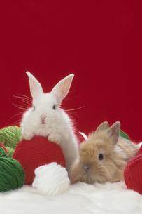 2匹のウサギとカラフルな毛糸の素材 [FYI01127320]
