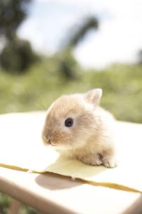 ウサギの素材 [FYI01127849]